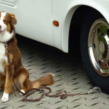 Soporte para perros REIMO 2